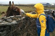 girl feeding a donkey near Cliffs of Moher hiking trail