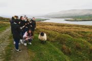 a group taking photo of sheep on Valentia Island