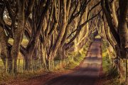 Erie photo of The Dark Hedges Northern Ireland, famous Game of Thrones location
